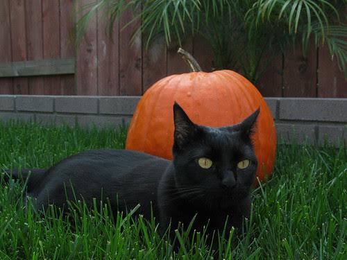 Boomer at Halloween