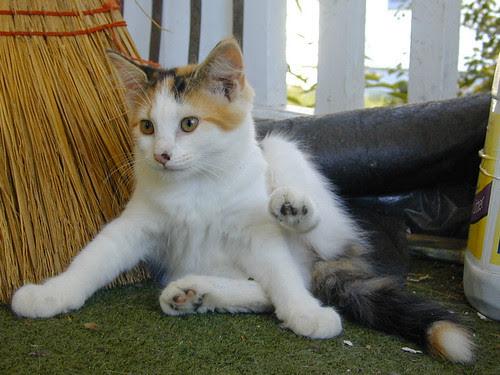 one lert  kitty