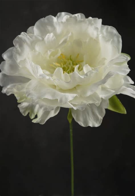 Cream White Silk Peony Flowers