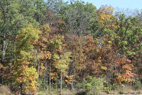 IMG_2851_Autumn_Leaves