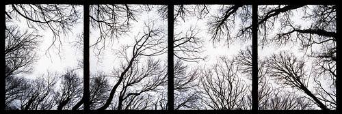 winter tree tops by pho-Tony