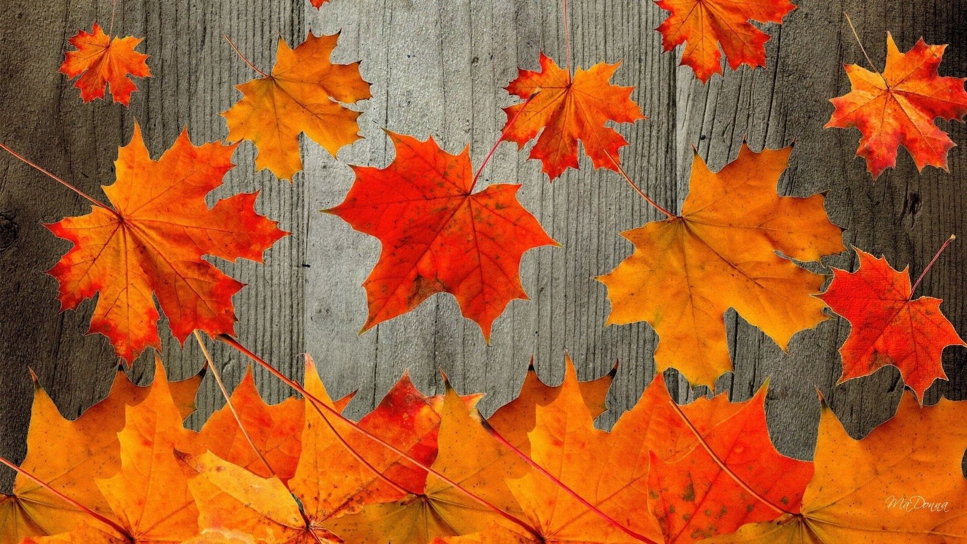 45 Best Of Free Desktop Wallpaper Autumn Summer Background