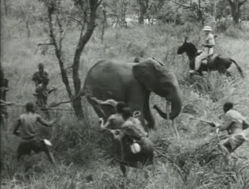 Elephant%20Capture-7 by bucklesw1