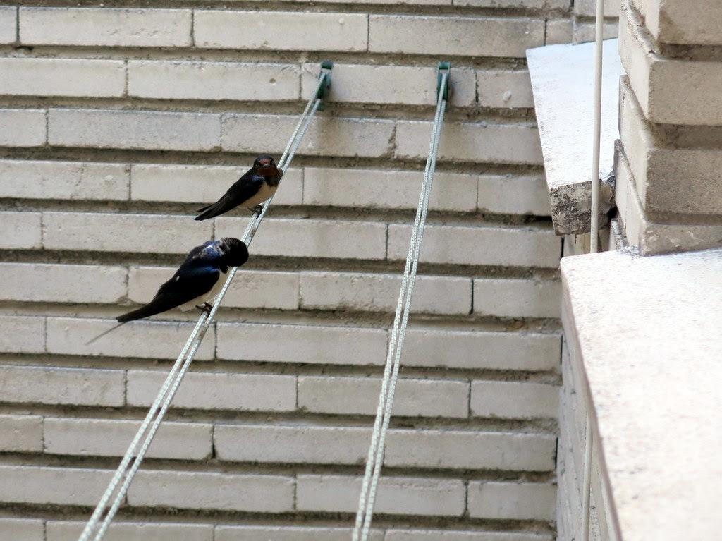Han regresado mis vecinas