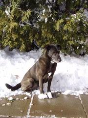 backyard snow feb 07 08 033