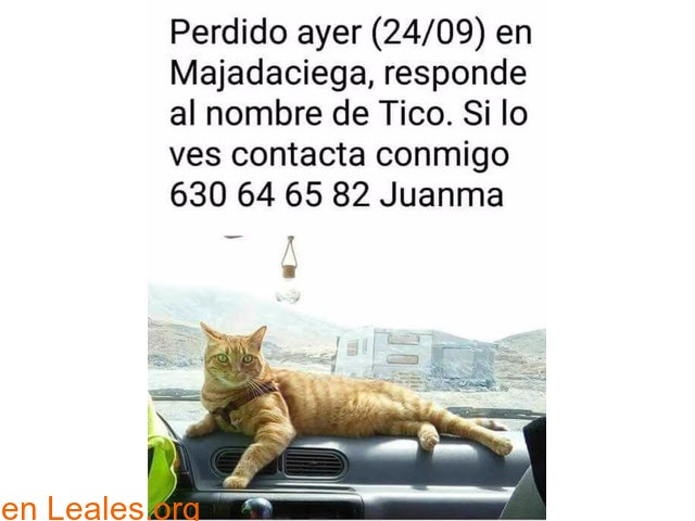 Gatos perdidos o encontrados » Las Palmas - Gran Canaria » Buscamos a Tico » Perdido ayer (24/9) en Majadaciega, Vecindario. Responde por Tico. Contacto: Juanma 630646582