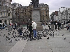 Merpati di Trafalgar Square, London, UK