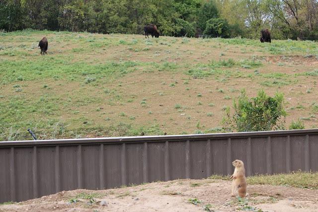 Zoo fun 055