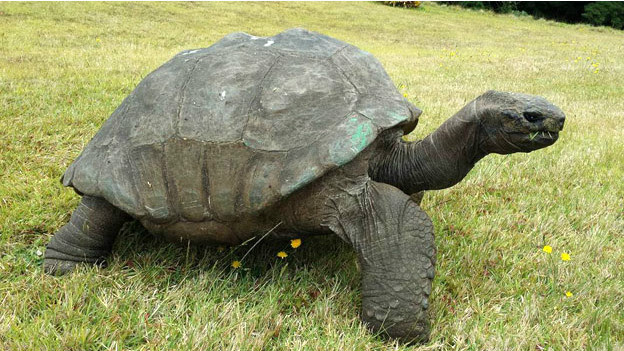 140314104133_jonathan_tortoise_624x351_bbc_nocredit[1]