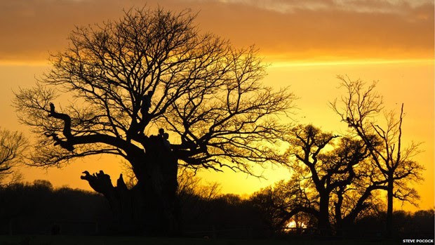 Steve Pocock foi o vencedor na categoria Florestas e Pessoas com essa fotografia de um grupo assistindo ao pôr do sol, de uma árvore, em Richmond Park, em Londres.  (Foto: Steve Pocock/BBC )