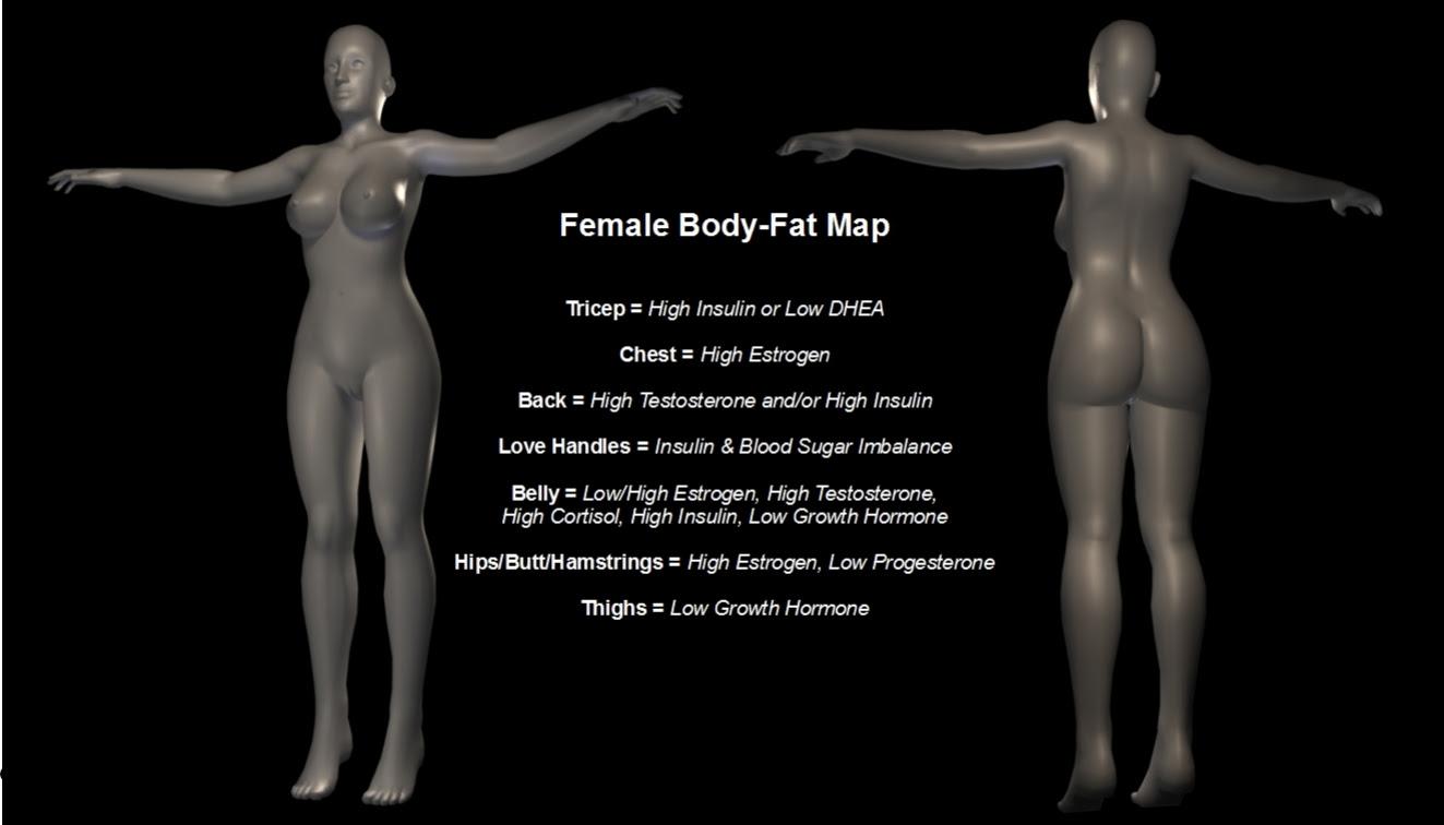 safe body fat percentage female