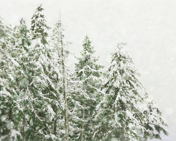 BOGO Winter Photography 8x10, Christmas Home Decor, Snow Storm Wall Art, Green and White Ski Lodge Decor, Snowy Forest Nature Photography - PureNaturePhotos