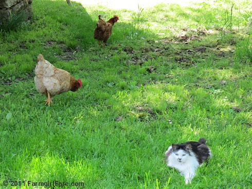 Cheeky, Tuffy, and Smudge - Farmgirl Fare