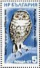 Little OwlAthene noctua