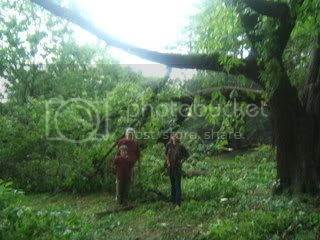 tree branches down