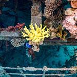 אלמוגים שהודפסו בתלת-מימד הוצבו במפרץ אילת - ynet ידיעות אחרונות
