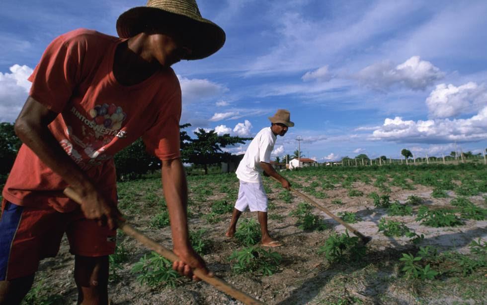 Dos miembros de una comunidad indígena del nordeste de Brasil cuidan una plantación de mandioca.