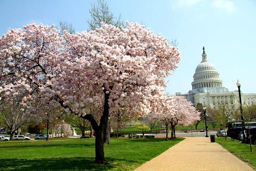 Washington DC Day 1 086-001