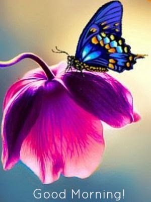 Good Morning Butterfly Pictures Photos And Images For Facebook