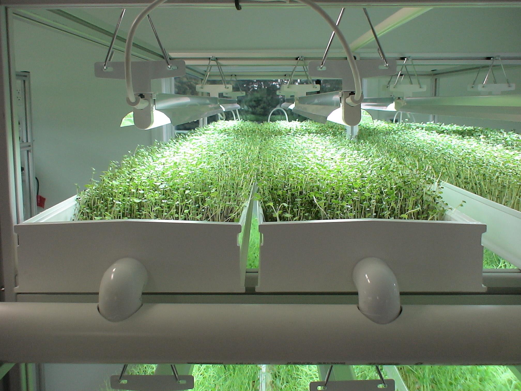 Как купить семена для гидропоника семена афганского канабиса