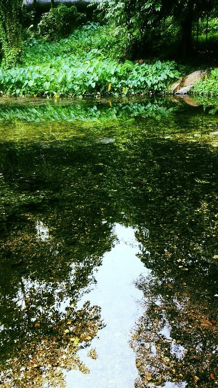 A sun-kissed creek