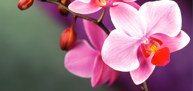 Výsledek obrázku pro orchid