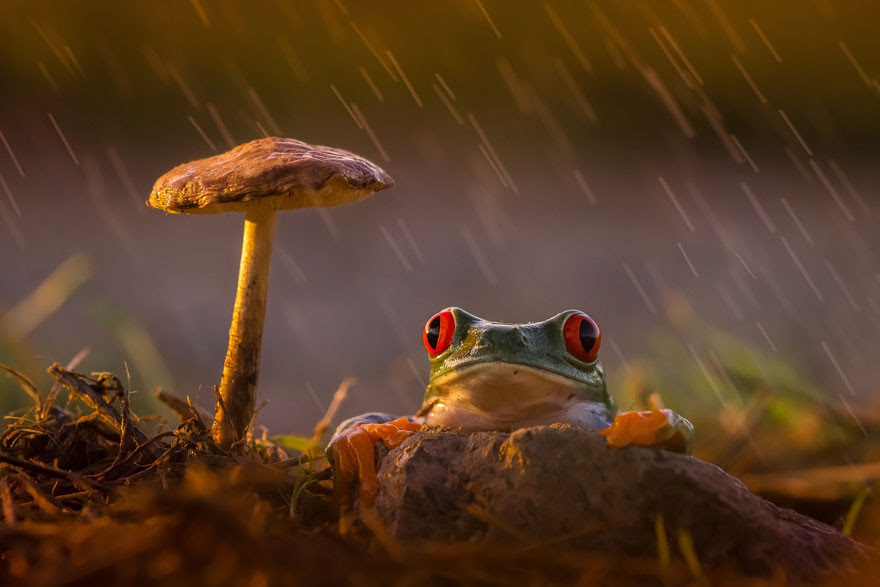 17. Rain and light toad frog selection