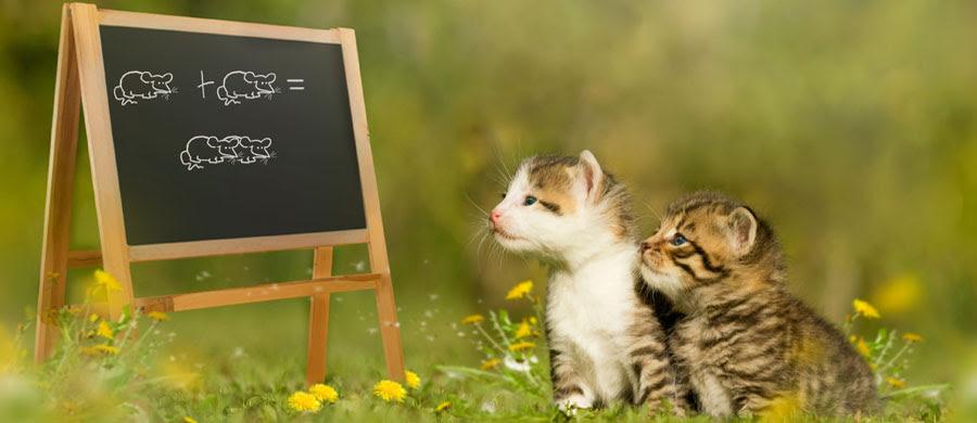 Berühmte Katzennamen Aus Filmen