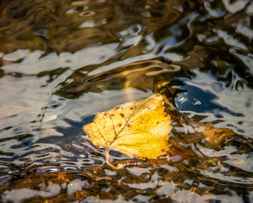leaf in water