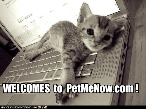 LOLcats: My Favorite Website!