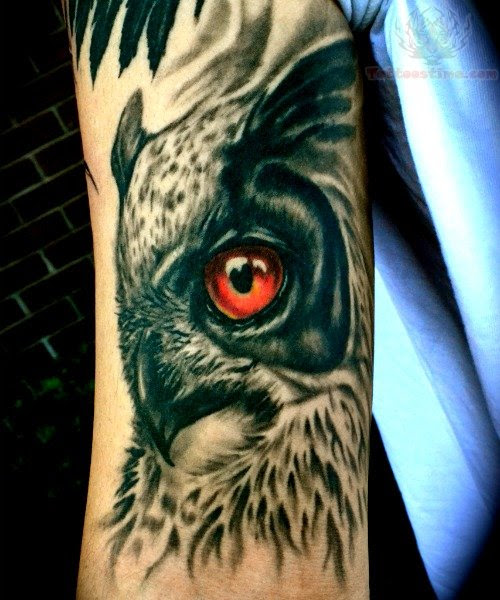 1000+ images about owl on Pinterest | Owl Tattoos, Barn ...