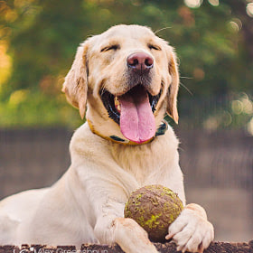 Happiness Is a Big, Muddy, Tennis Ball by Alex Greenshpun (nalini)) on 500px.com