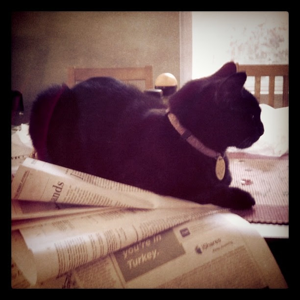 Starting to think cats will be the ones to miss newspapers the most.