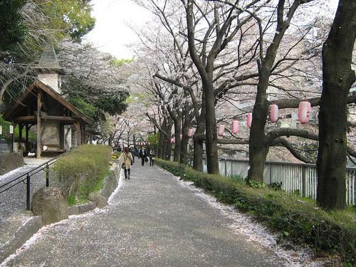 Edogawa Park is beautiful!