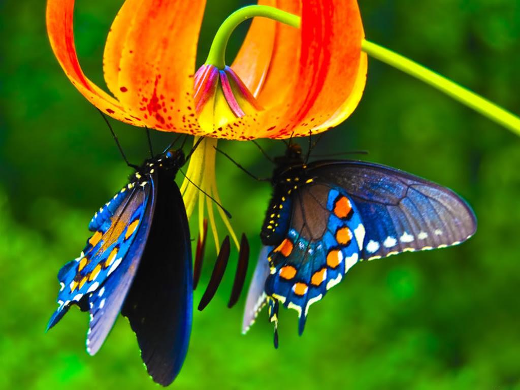Fondos De Flores Descubre El Fondo De Flores Ideal Para Tu Pantalla