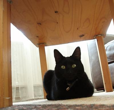small black cat under a table