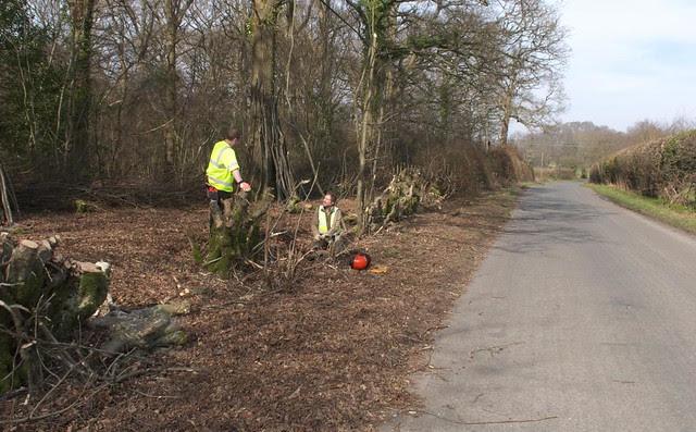 DSC_8149 roadside tree cutting