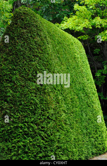 manicured cedar hedge greater sudbury ontario canada cy0xht