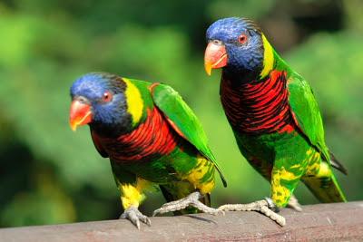 Parrots at Lory Loft