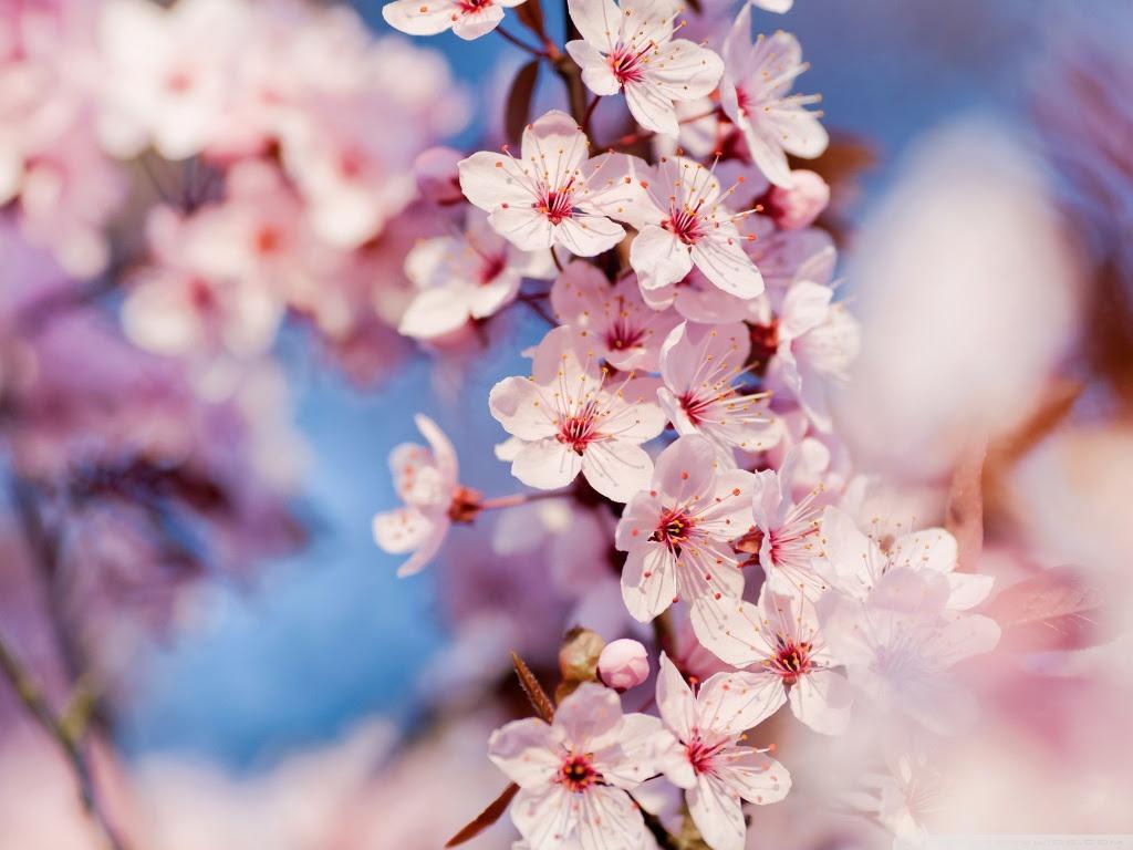 Ipad用 壁紙に使える春を感じさせる画像 イラスト集 Naver まとめ
