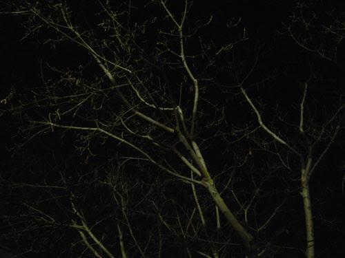 Trees at Night _ 9264
