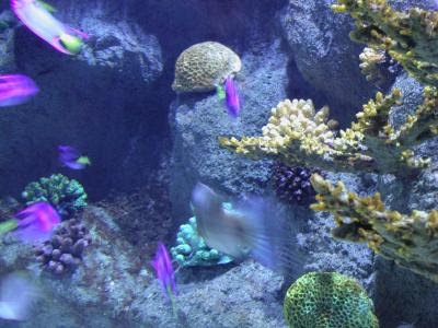 Every aquarium needs some type of filtration system.