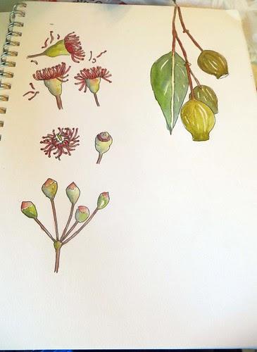 from my sketchbook ~ in progress
