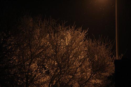 snowy tree night1