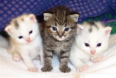 gambar kucing lucu indonesiadalamtulisan terbaru