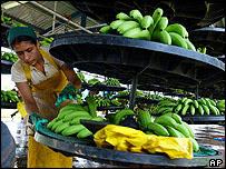 哥斯達黎加香蕉農