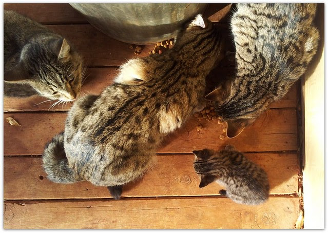 kitten 2