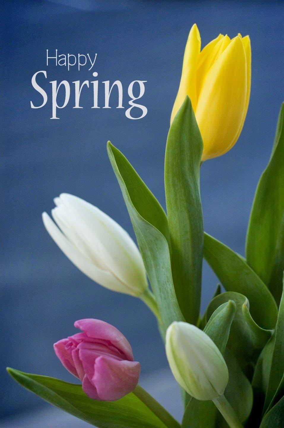 Happy Spring Pictures, Photos, and Images for Facebook ...