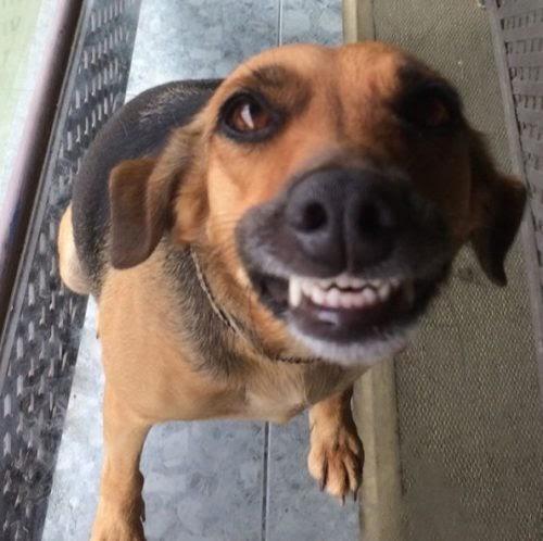 Graban la reacción de una perrita al ser atendida por su veterinaria y se hace viral