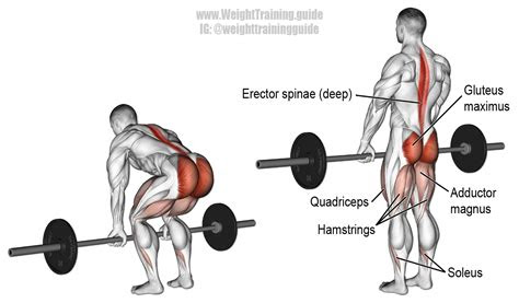 barbell deadlift exercise instructions  video weight
